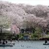 花見で有名な洗足池公園でボートに乗ったりしてリフレッシュ