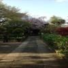東京十社巡り① あじさい祭りで有名な文京区の白山神社
